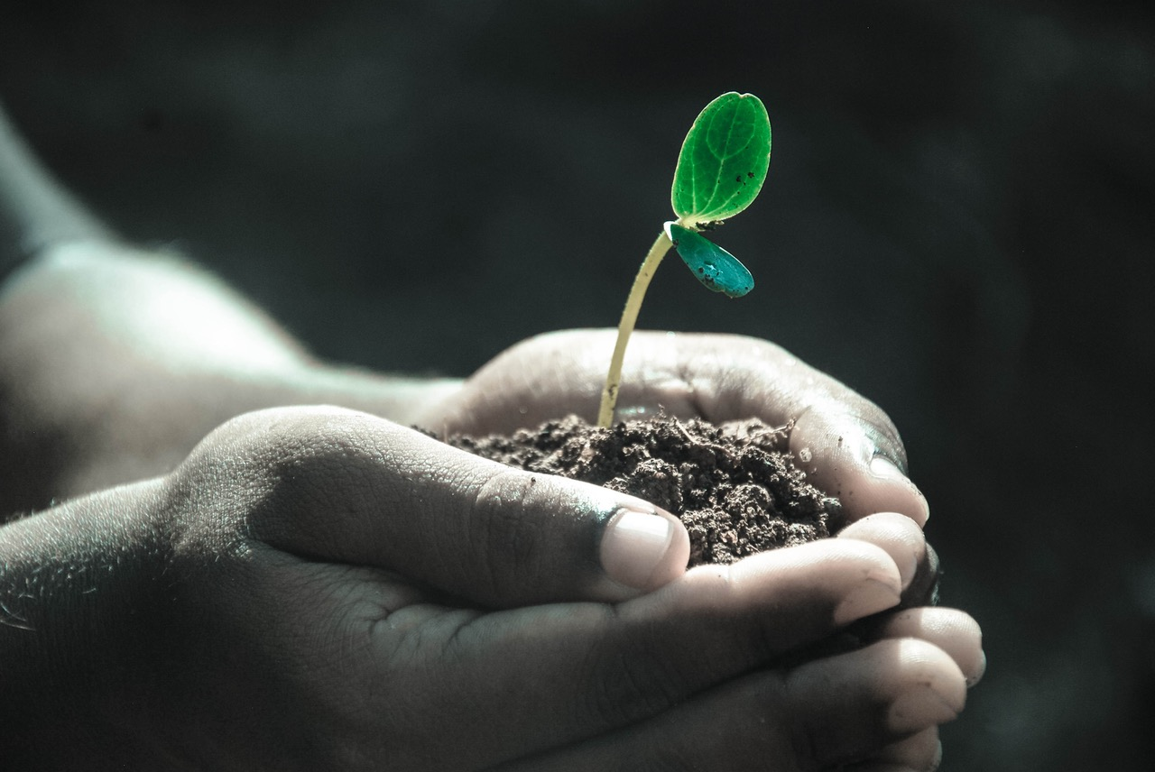 photo of a hand holding a seedling
