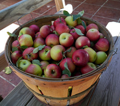 photo of basket of apples