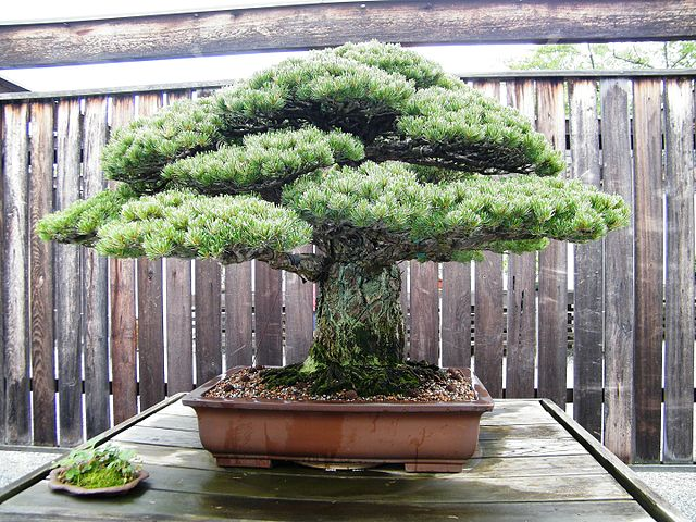 Photo of bonsai tree
