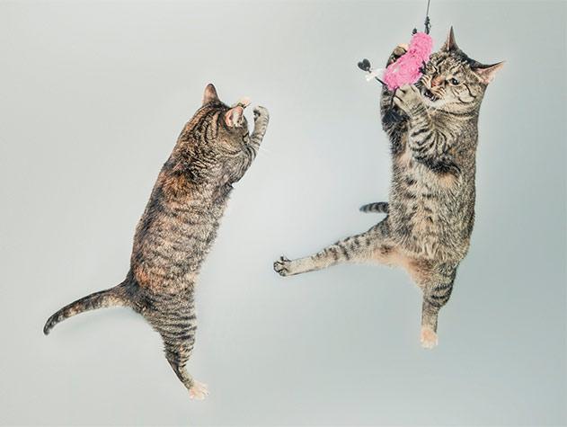 Feline Fiesta