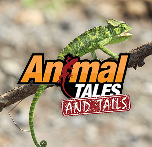 Animal Tales and Tails