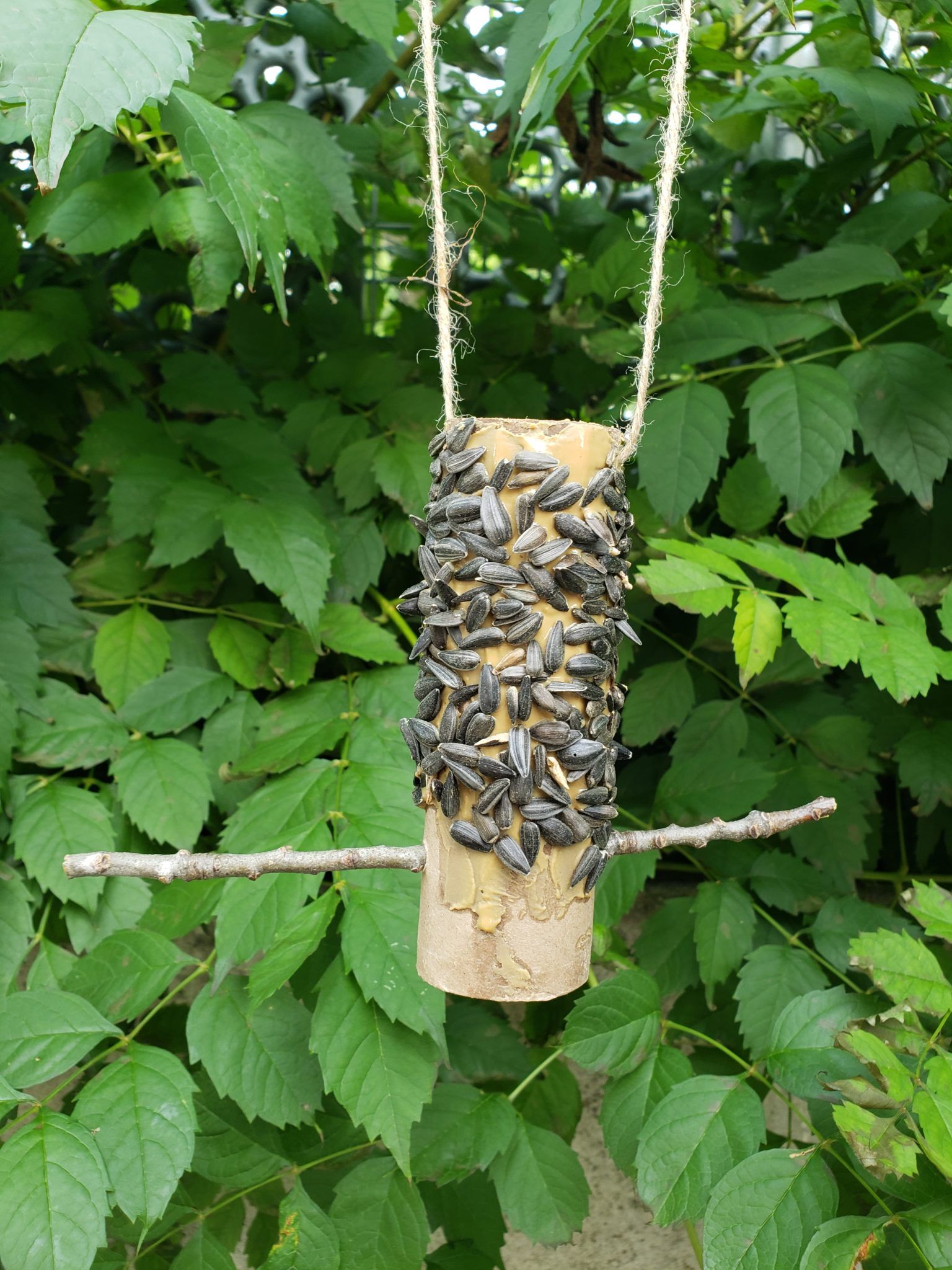 Cardboard bird feeder in nature